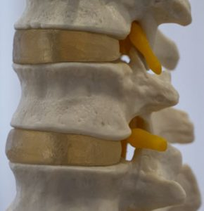 spine-yoga