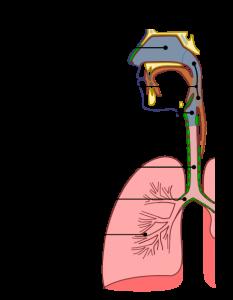 URT structure